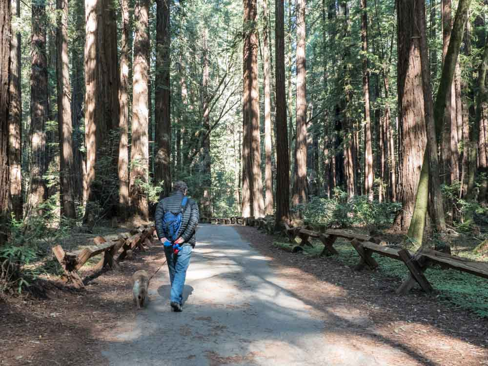 Armstrong Woods Hiking. Things to do in Guerneville California