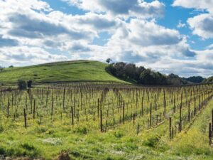 Things to do in Russian River Valley Vineyard landscape