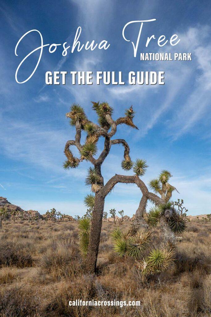 Joshua Tree National Park travel guide
