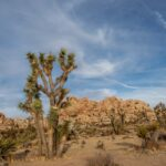 What to Do in Joshua Tree, National Park (in One Action-Packed Day)