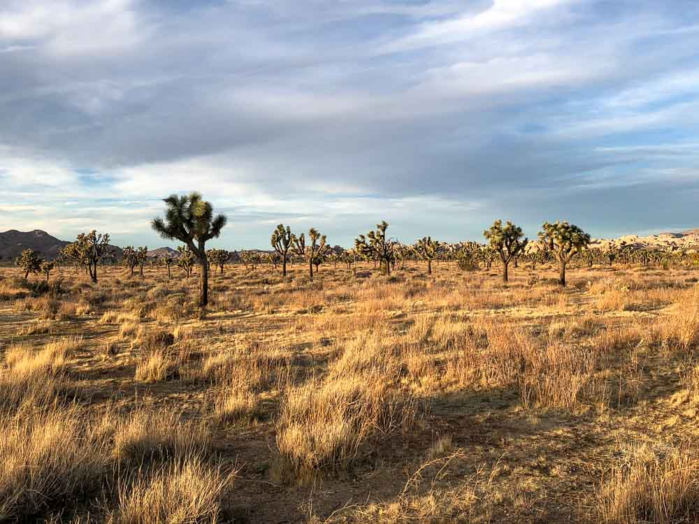Joshua Tree day trip: late afternoon light
