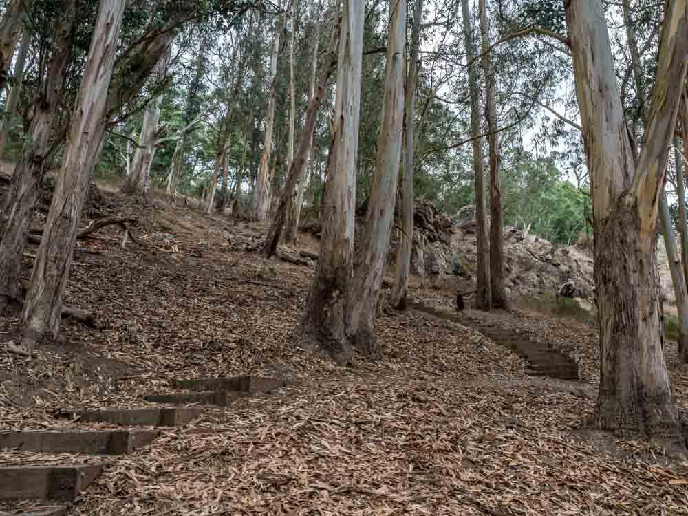 San Francisco Glen Park Canyon trees