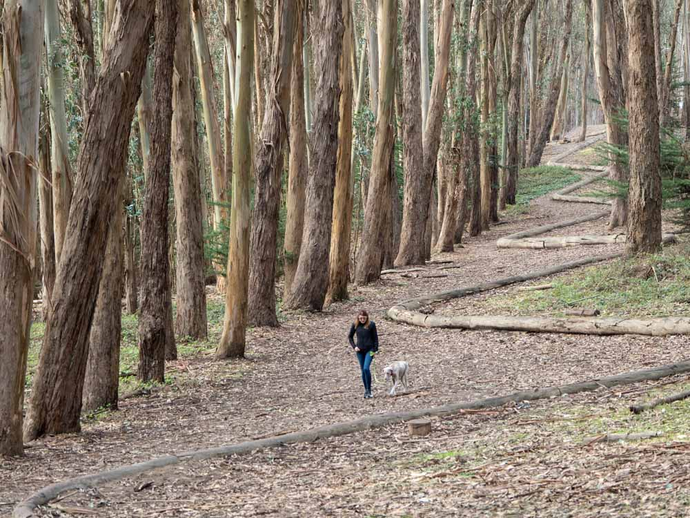 Goldsworth lines in the Presidio San Francisco. Woman walking in the woods