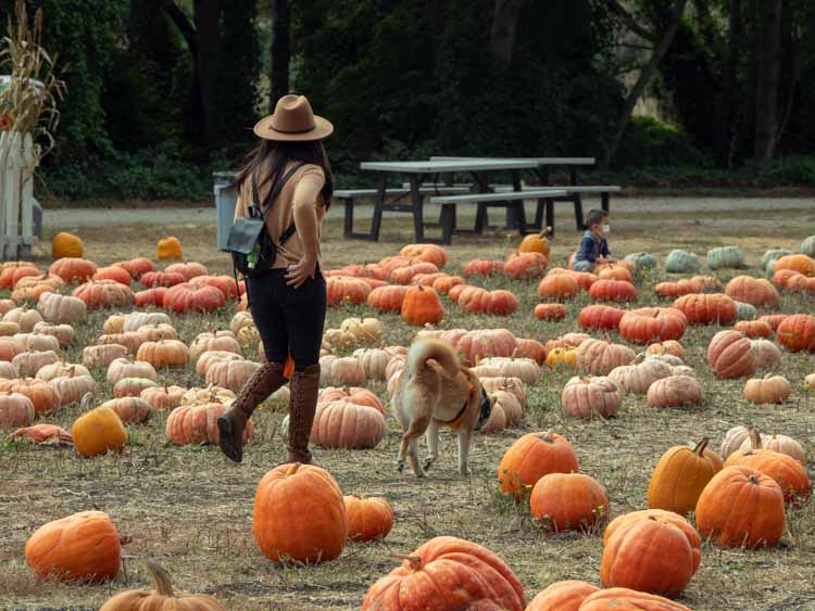 Best Half Moon Bay pumpkin patches: 4-Cs. Woman and dog in field