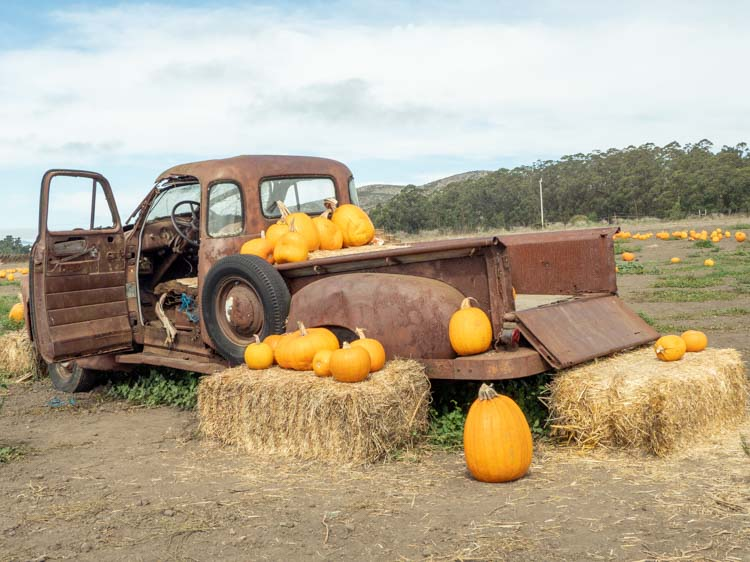 Bob's Pumpkin Farm in Half Moon Bay. rusted truck and pumpkins