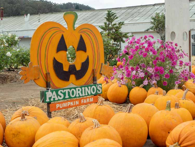 Pastorino pumpkin patch in HMB