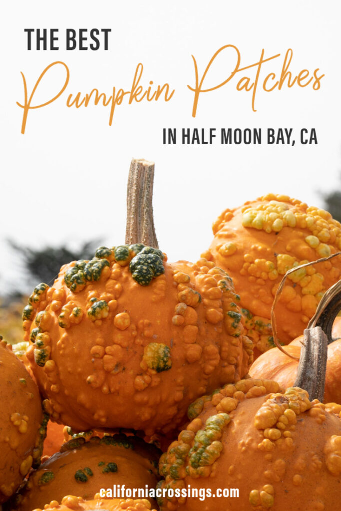 The 10 best pumpkin patches in Half Moon Bay