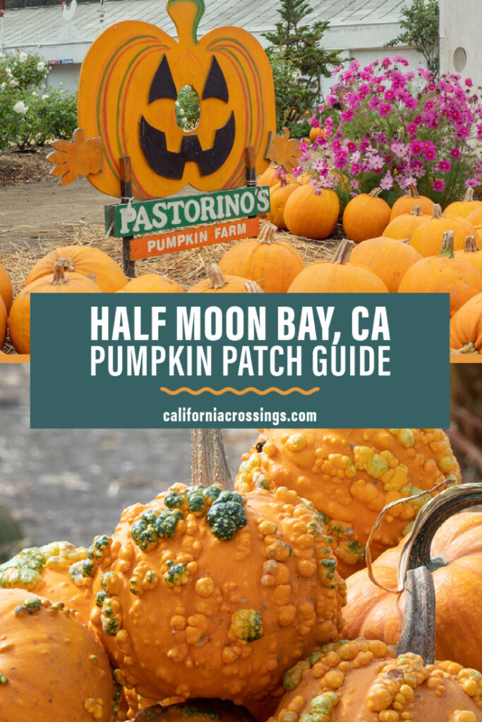The best pumpkin patches in Half Moon Bay, California