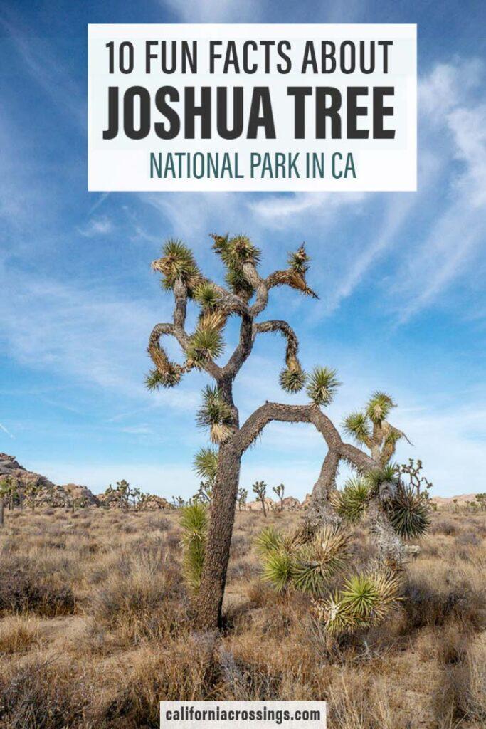 10 fun Joshua Tree National Park facts