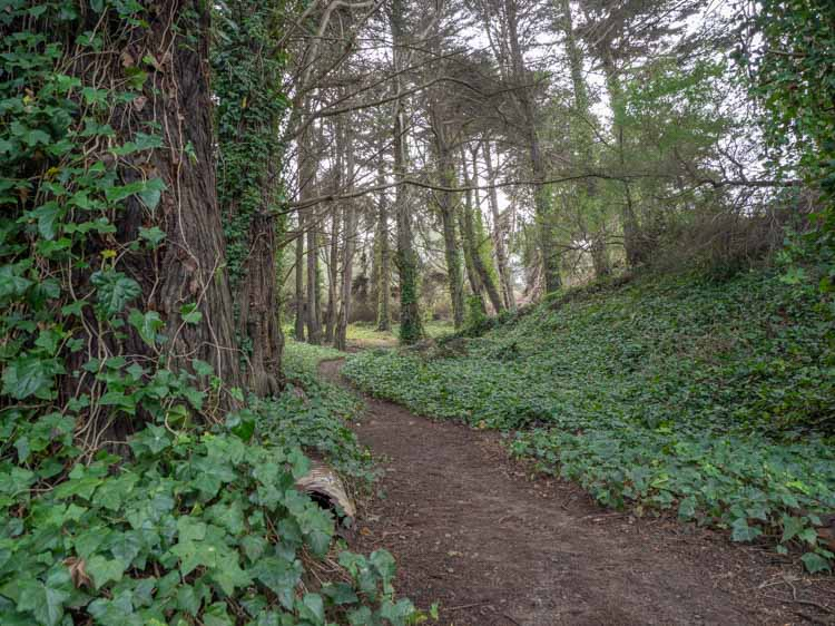 Lands End hike pathway in forest