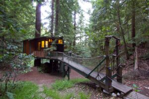 Santa Cruz redwood treehouse. cabin with walkway