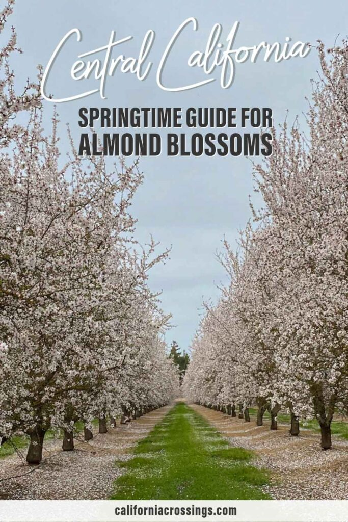 Central California guide for finding springtime almond blossoms