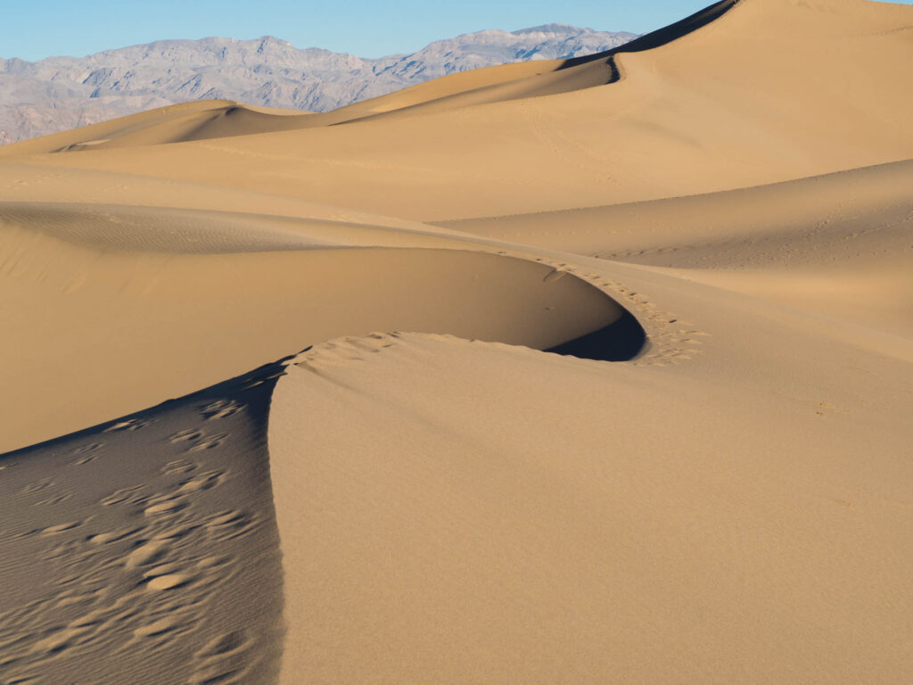 Mesquite dunes at dawn in Death Valley WS