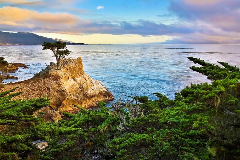 17 mile drive Carmel California Cypress tree