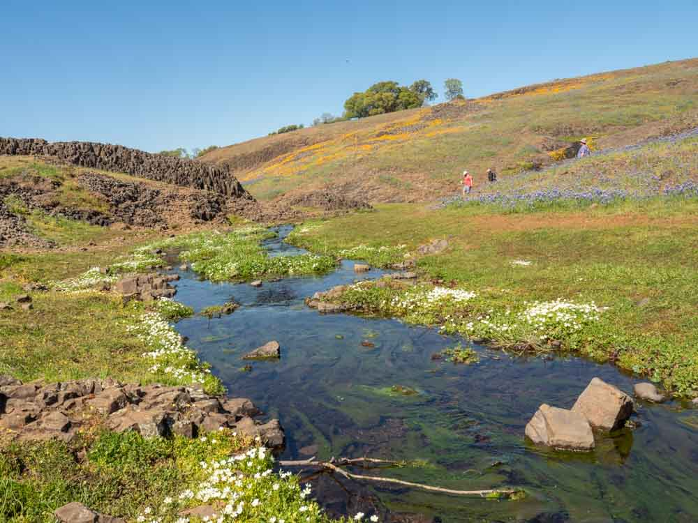 North Table Mountain Oroville: Stream and wildflowers