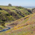 How to Take a Wildflower Hike on North Table Mountain in Oroville