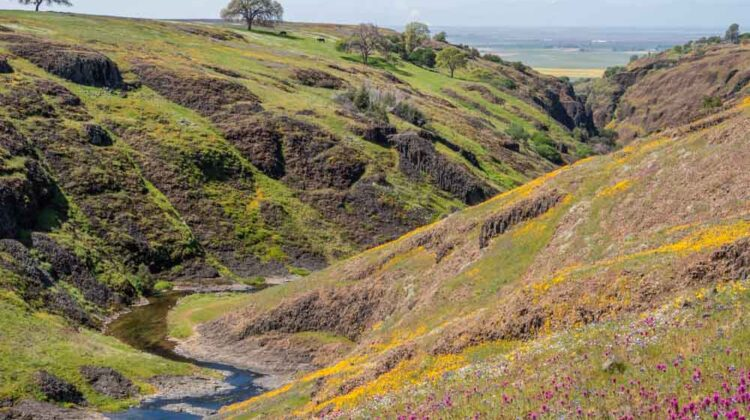 Oroville Table Mountain- Beatson Canyon Wildflower view. Ravine with creek
