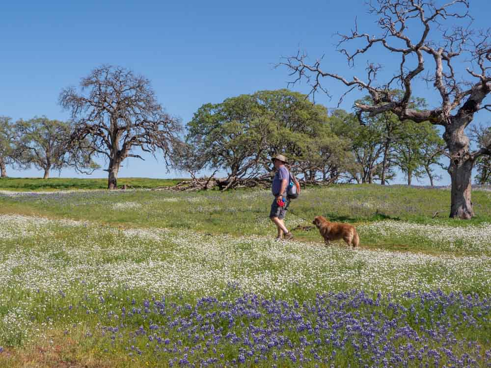 North Table Mountain Hiking with dog through wildflowers and trees