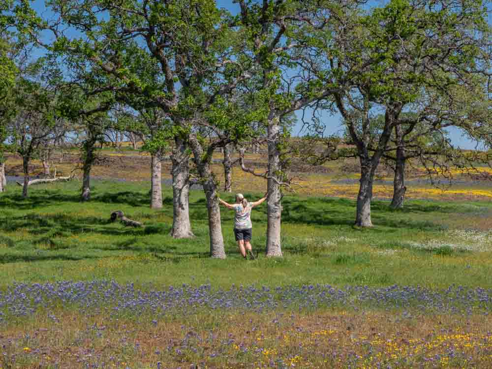 North Table Mountain hiking- oak trees and wildflowers