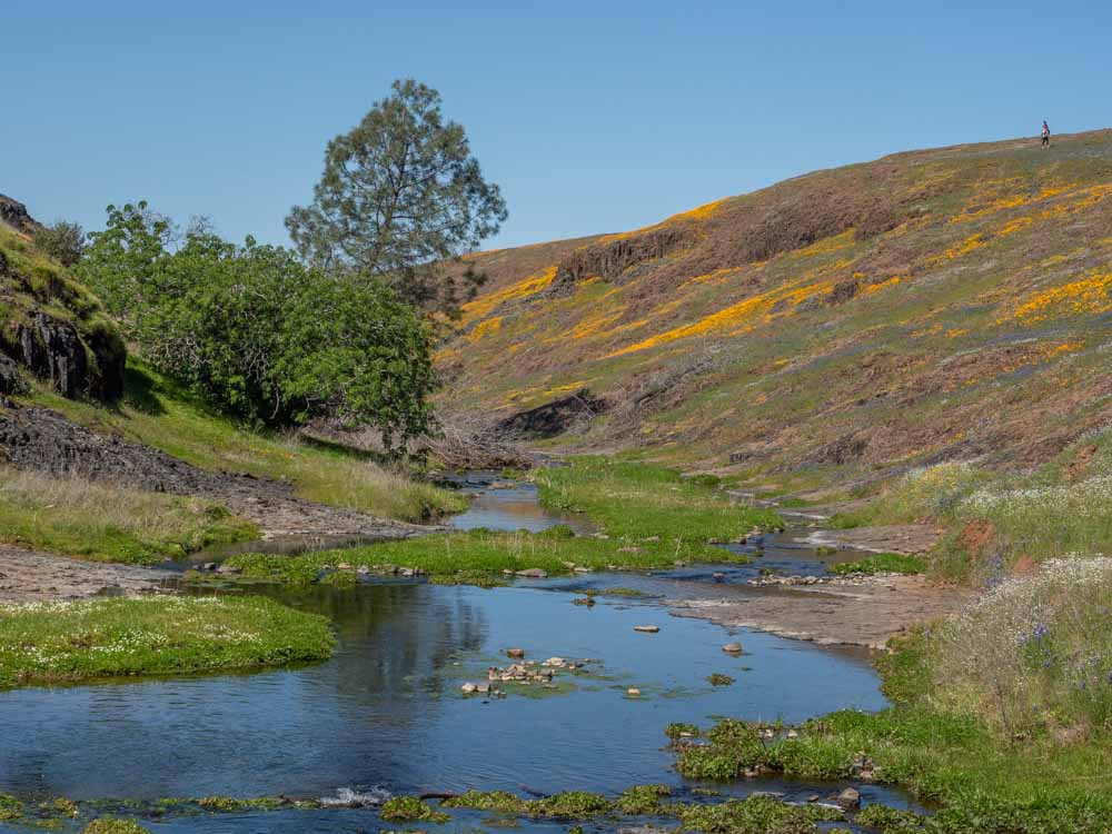 Table Mountain Upper Beatson Hollow. Creek and wildflowers