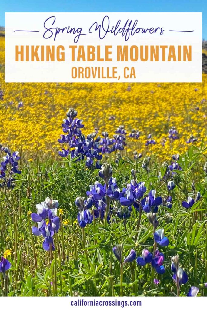 Spring Wildflowers Hiking Table Mountain Oroville California