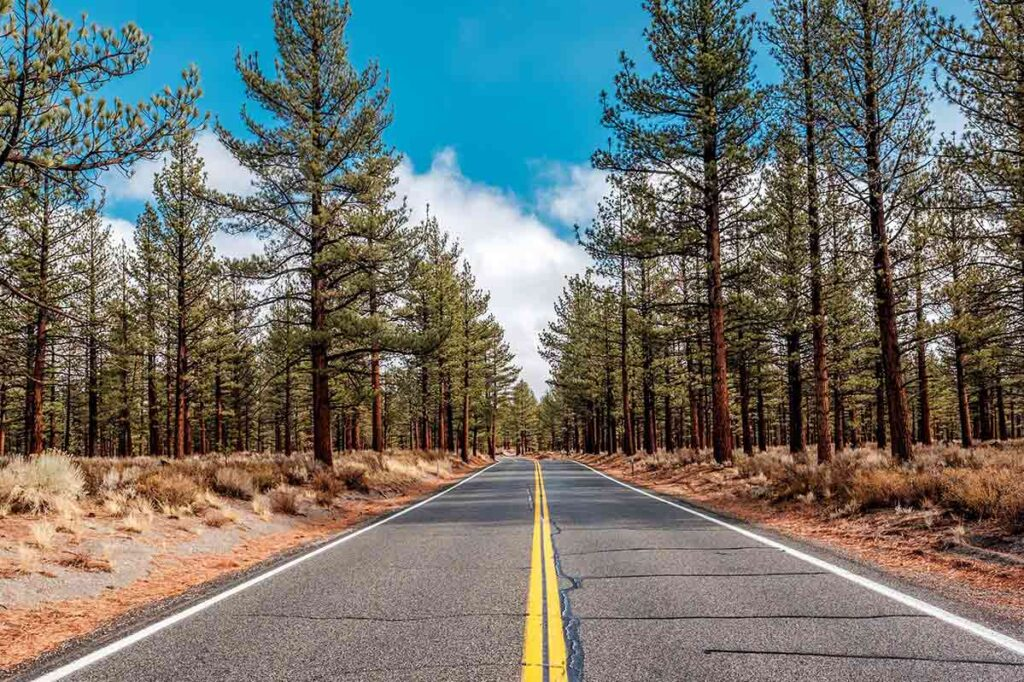 A California scenic road- with pine forest