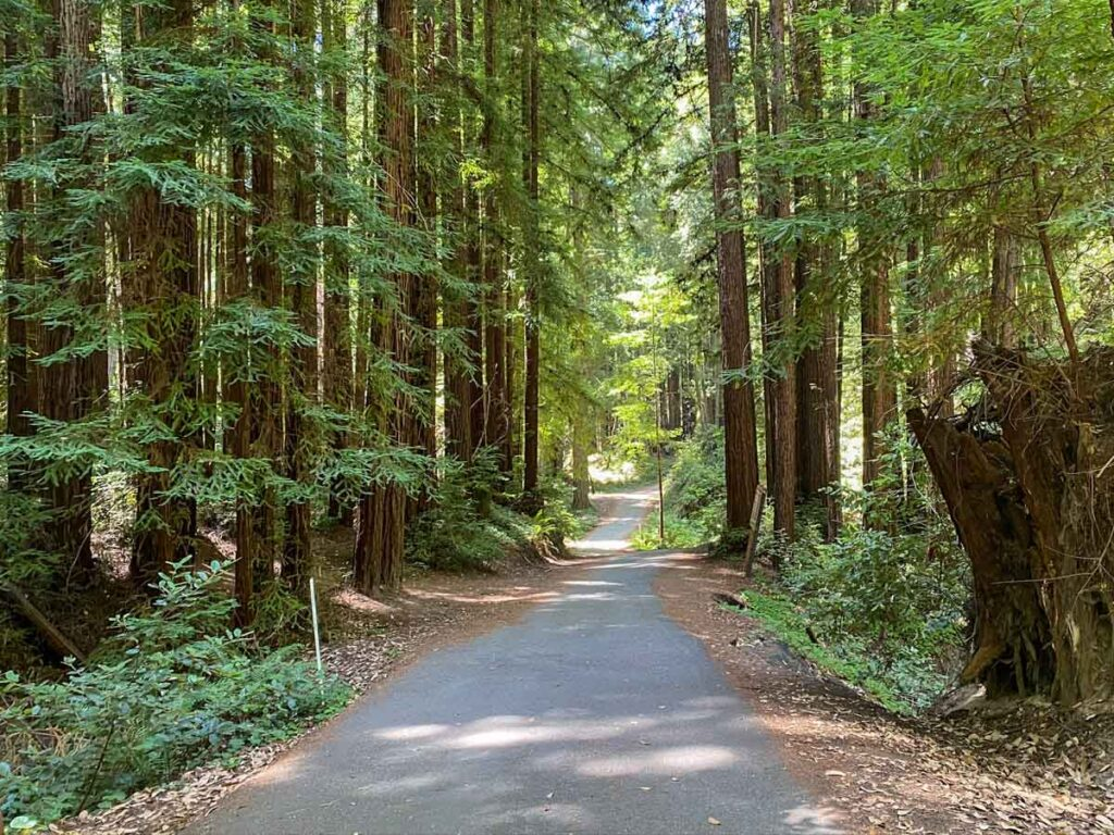 Henry Cowell State Park redwoods trail