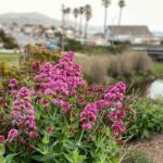 10 Things to Do in Cayucos on a Weekend Getaway