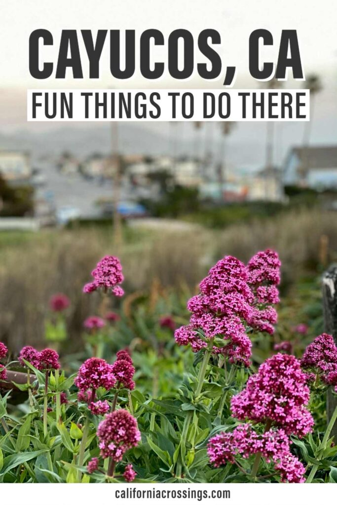 Fun things to do in Cayucos, CA