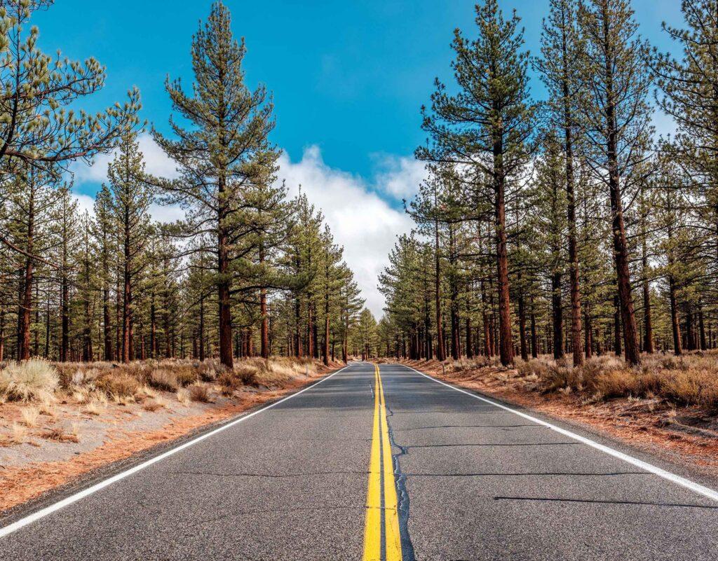 California road trip pines trees Webstory