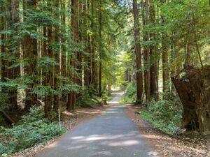 Redwoods Highway Drive WS