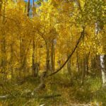 Where to Find Fall Color in the Eastern Sierras: 22 Leafy Locations