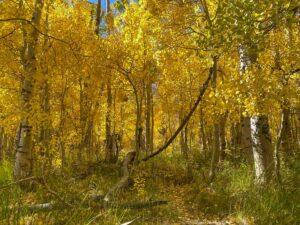 Convict Lake Eastern Sierras fall color aspens