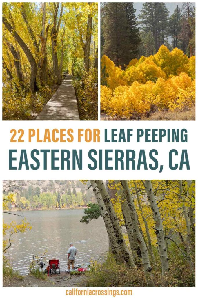 22 Places for fall color  Eastern Sierras California