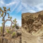 Joshua Tree to Death Valley Road Trip: 19 Key Stops & Routing