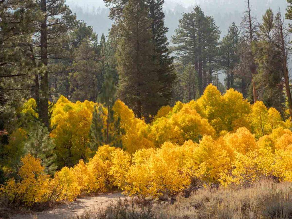 Fall color on Highway 120 Lee Vining