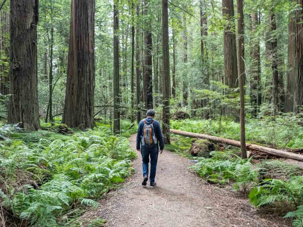 Pathway Avenue of the Giants male hiker