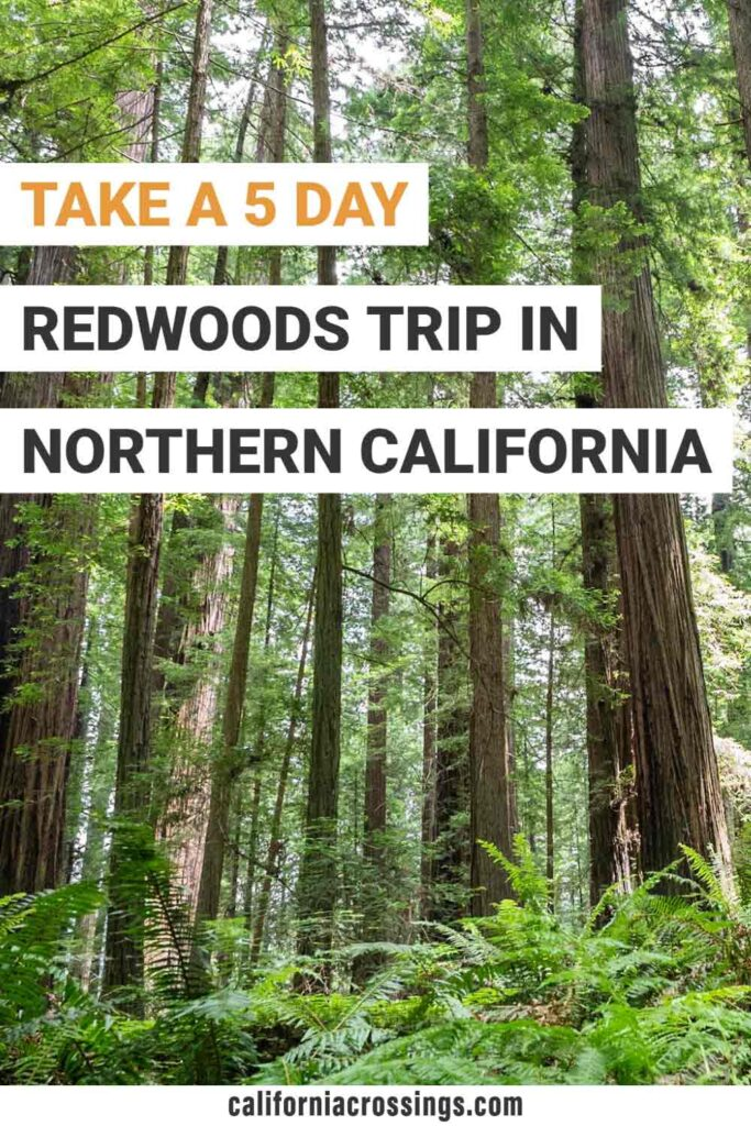 5 day redwoods road trip northern california