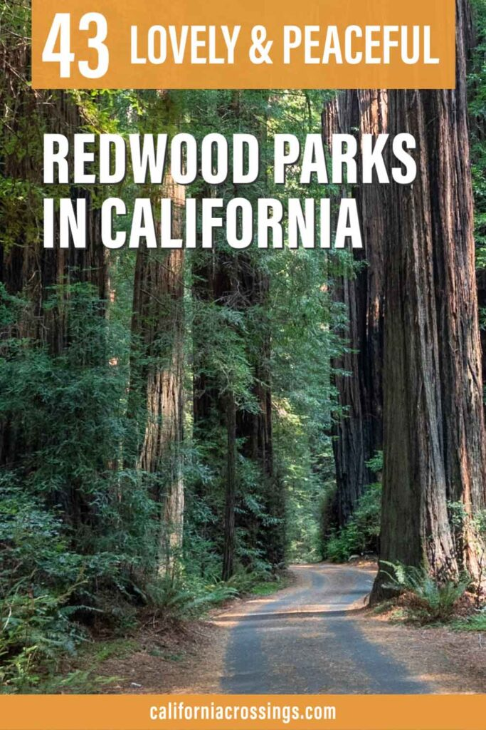 All 43 CA Redwood Parks. Avenue of the Giants and redwood trees