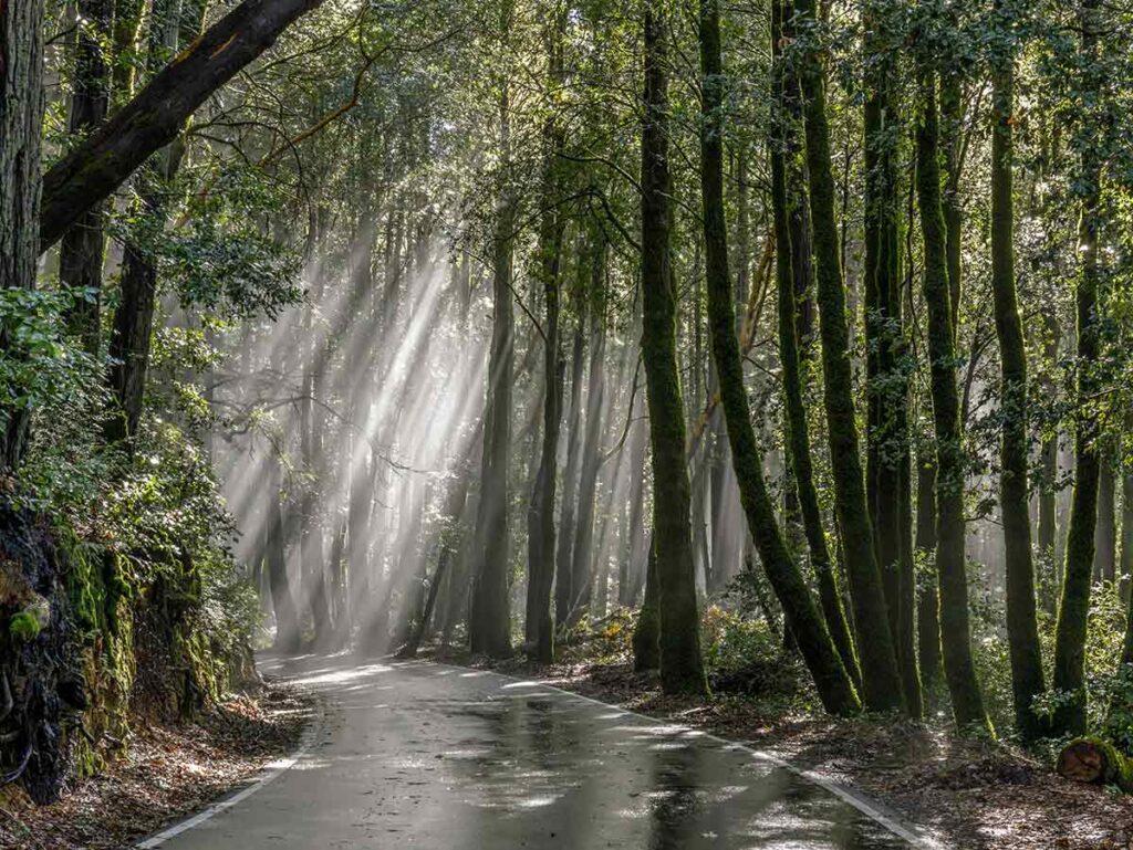 California Redwood parks: Big Basin SP. forest, road and light