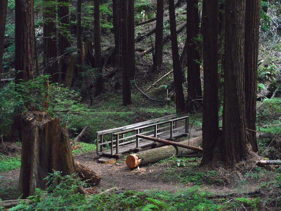 Butano State Park Bridge and redwood forest