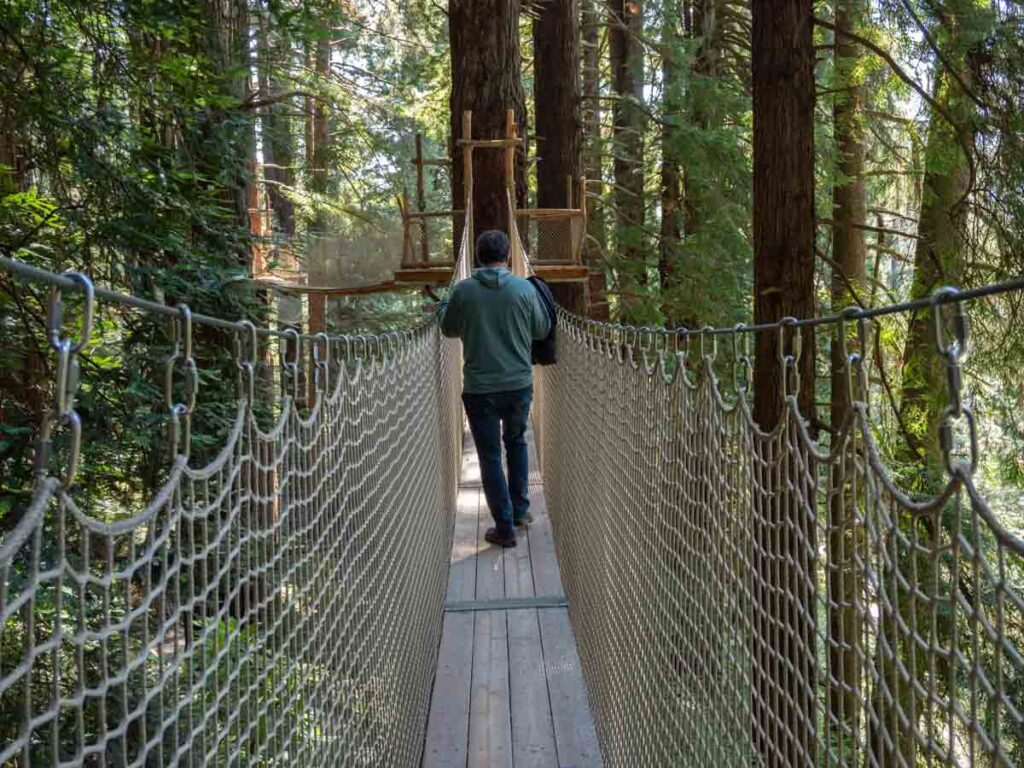 California Redwoods- Trees of mystery canopy walk