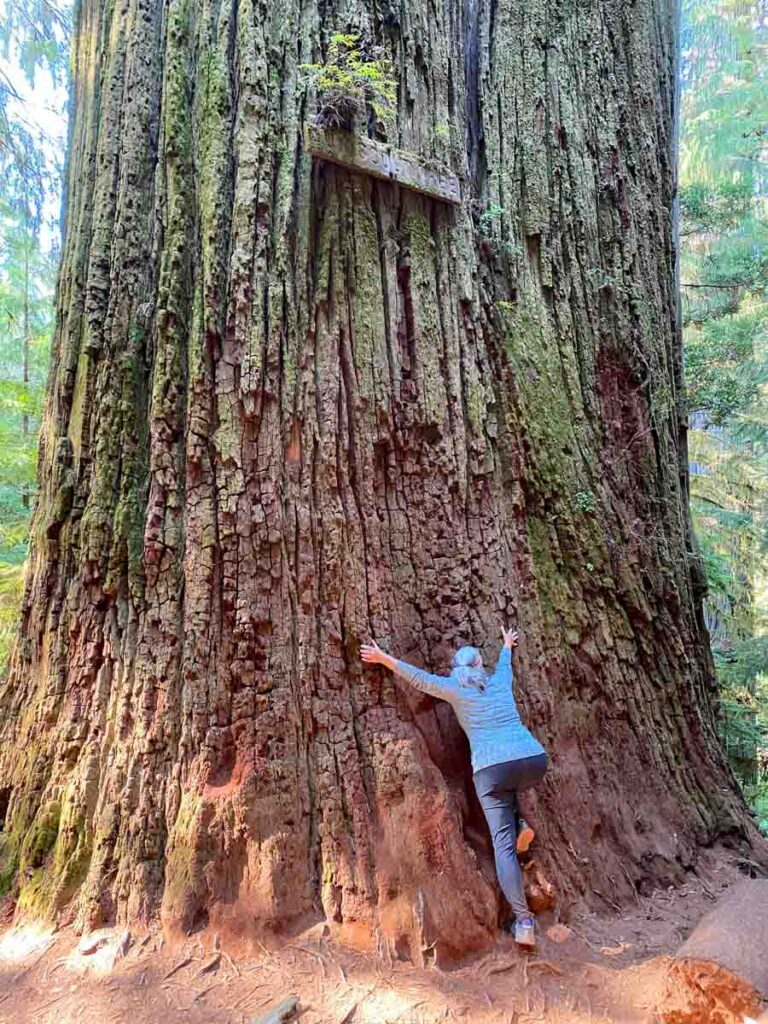Boy Scout Tree - Jedediah Smith Redwood State Park. woman hugging tree