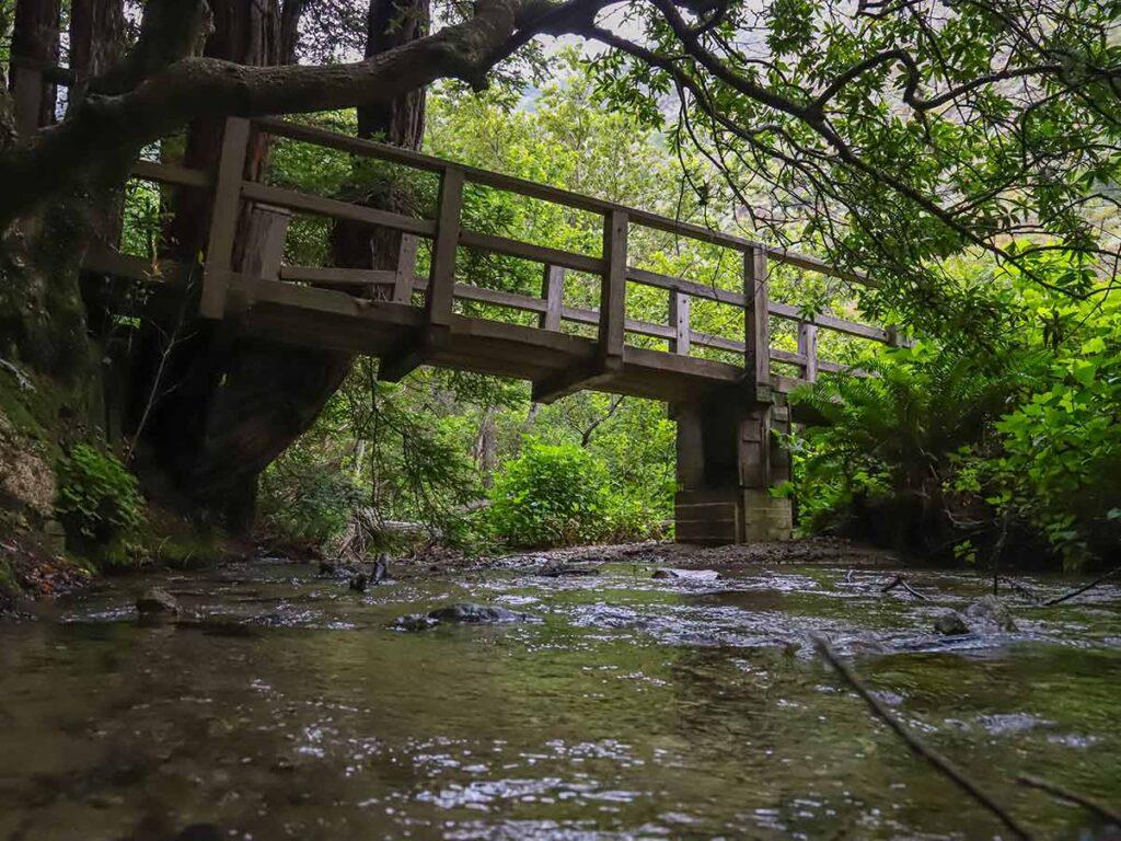 Partinggon Trail Julia Burns Pfeiffer State Park. bridge and woods