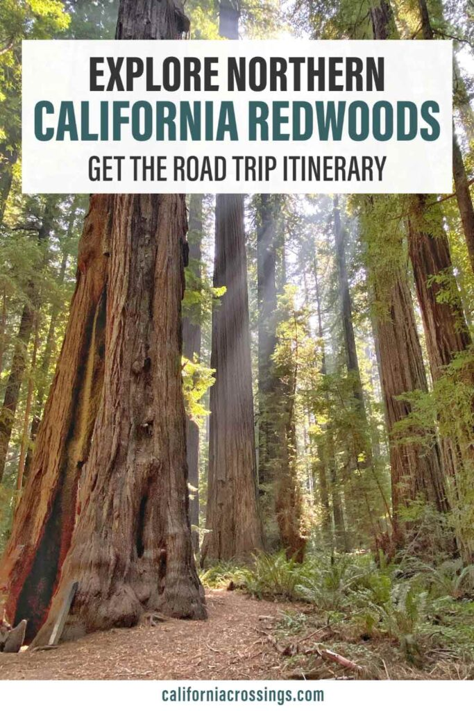 San Francisco to the Redwoods road trip itinerary